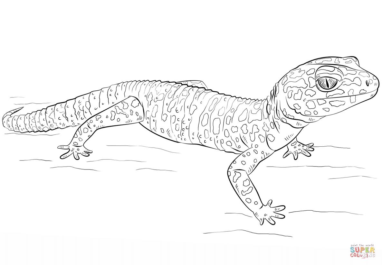 Gecko Bilder Zum Ausdrucken - Ausmalbilder