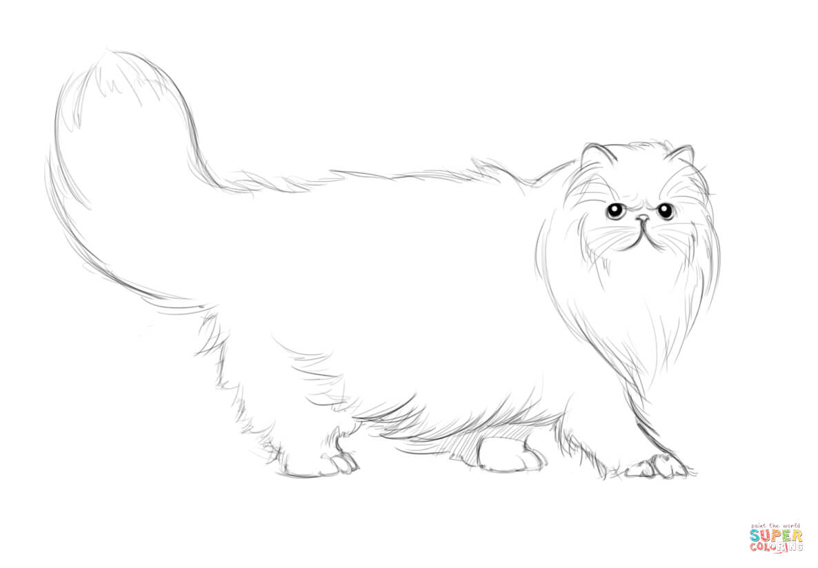 Persian Cat Coloring Page