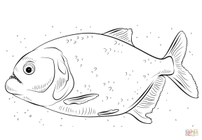 Red bellied piranha coloring page   Free Printable ...