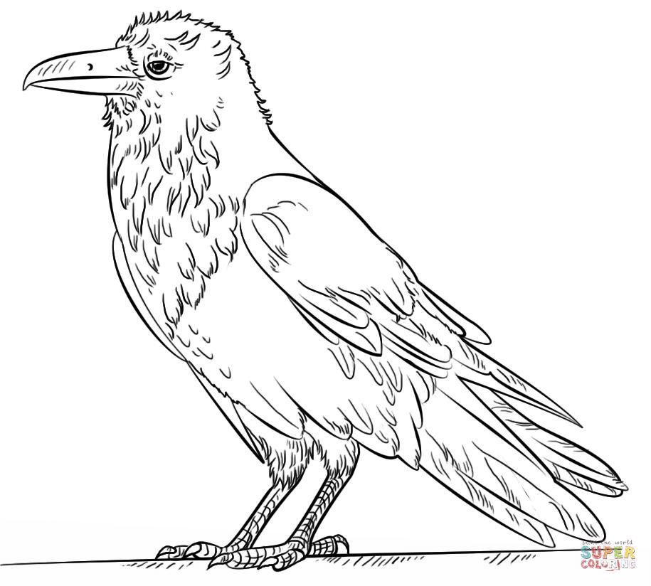 Coloriage - Grand Corbeau Coloriages à imprimer gratuits