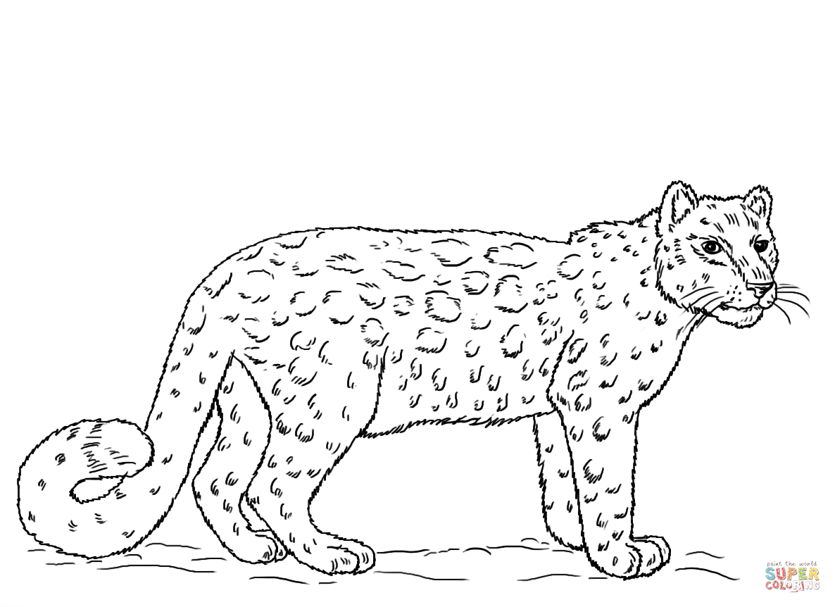 snow leopard anatomy diagram emergency key switch wiring coloring page free printable pages