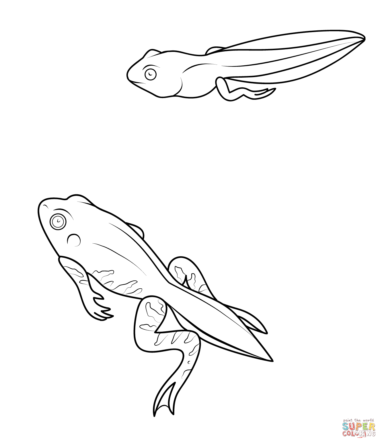 Tadpole And Froglet Coloring Page