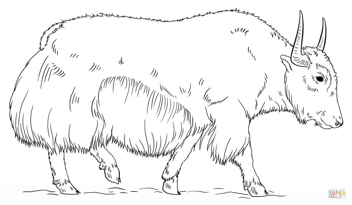 Walking Yak Coloring Page Free Printable Coloring Pages