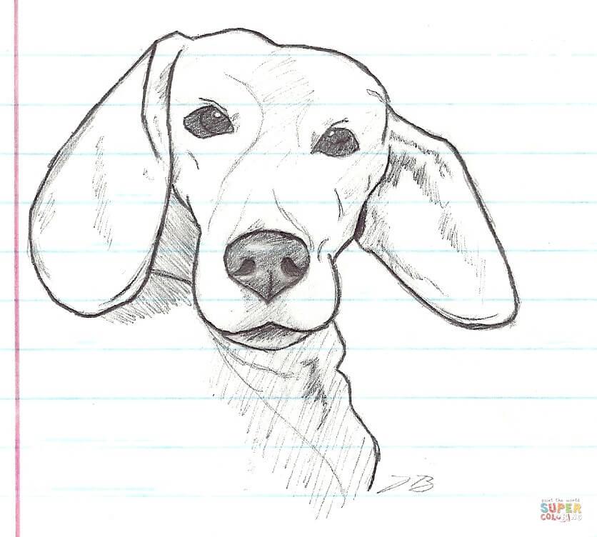 Desenho de Meu cachorro Beagle Lucky para colorir