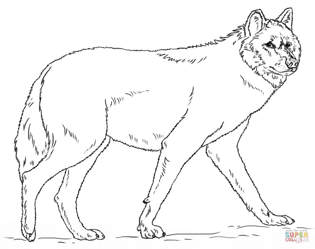 Wolf Bilder Zum Ausmalen Und Ausdrucken