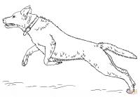 Coloriage - Labrador retriever sautant | Coloriages  ...