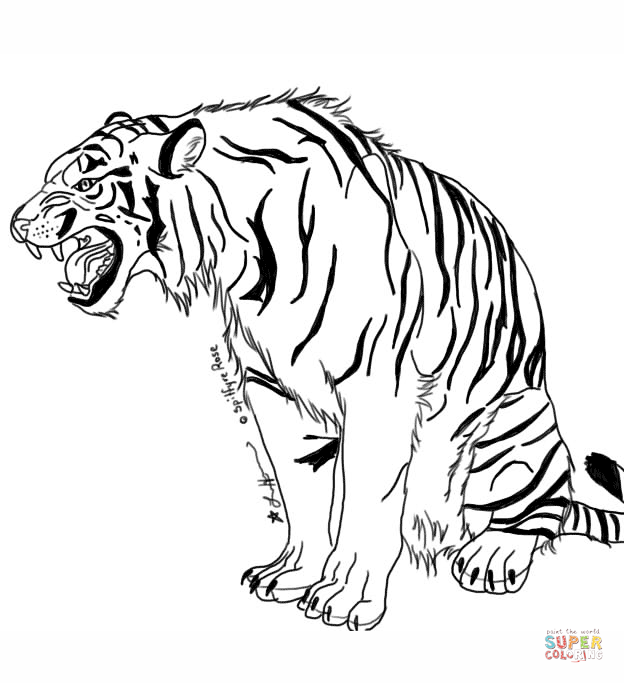 coloring pages tigers realistic zoo animal coloring pages realistic tiger snarling tiger - Coloring Pages Tigers Realistic