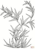 Come Colorare Il Bambu