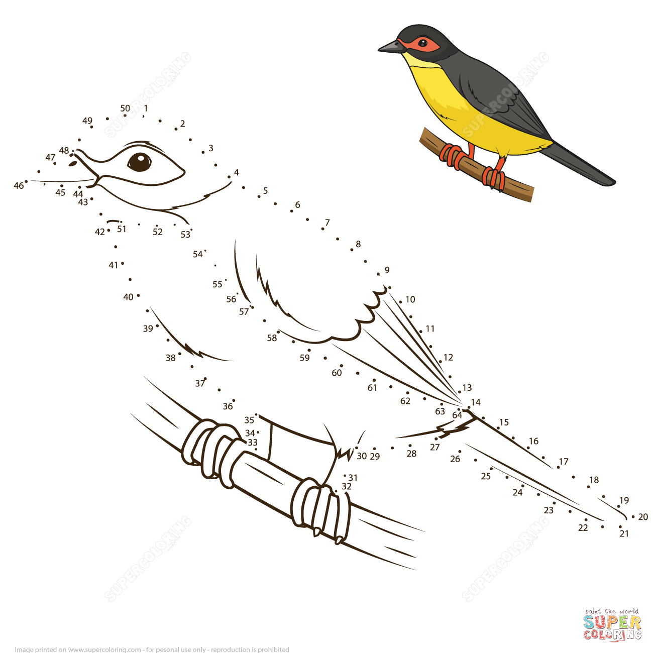 Australasian Figbird Dot To Dot