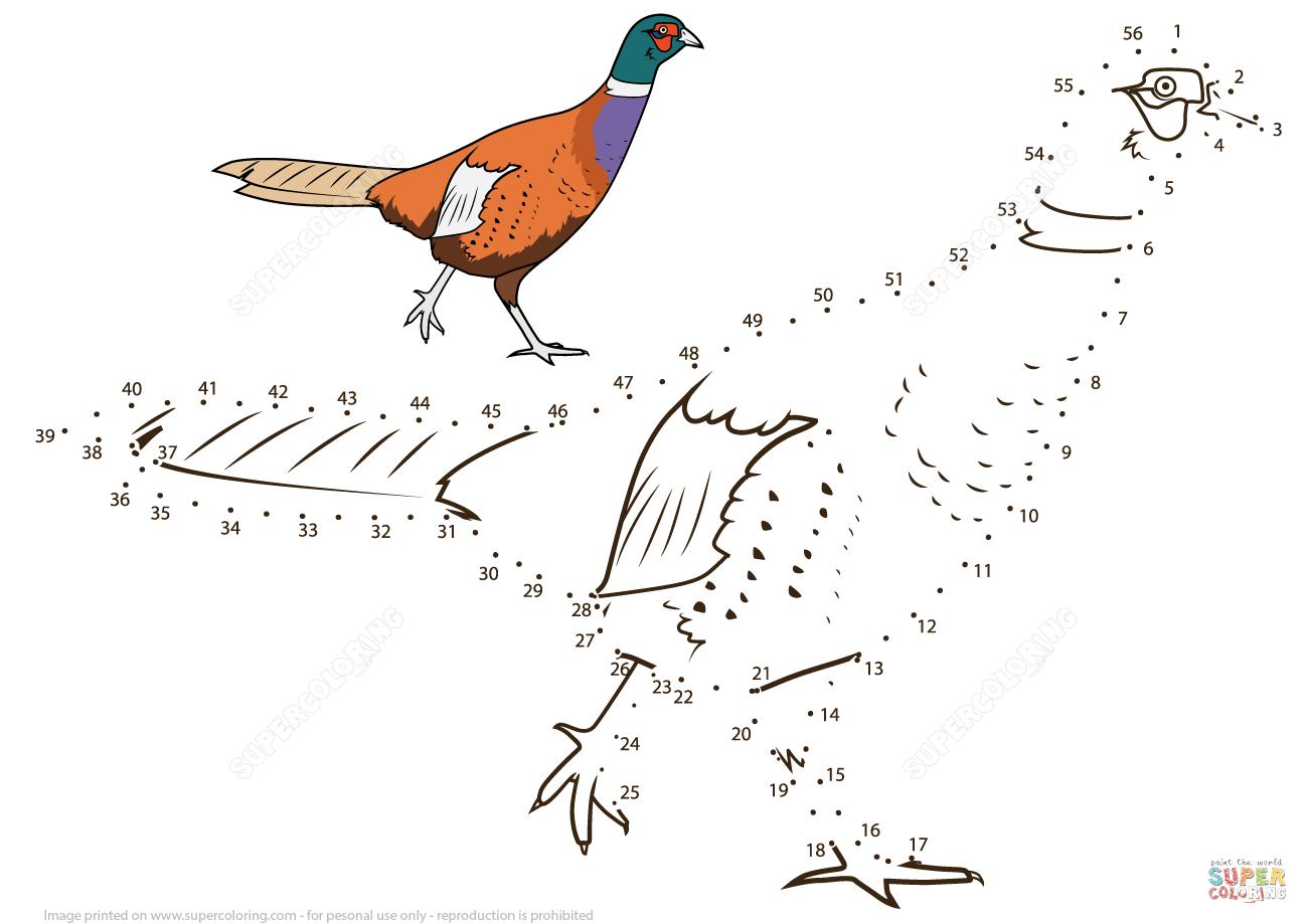 Pheasant Dot To Dot
