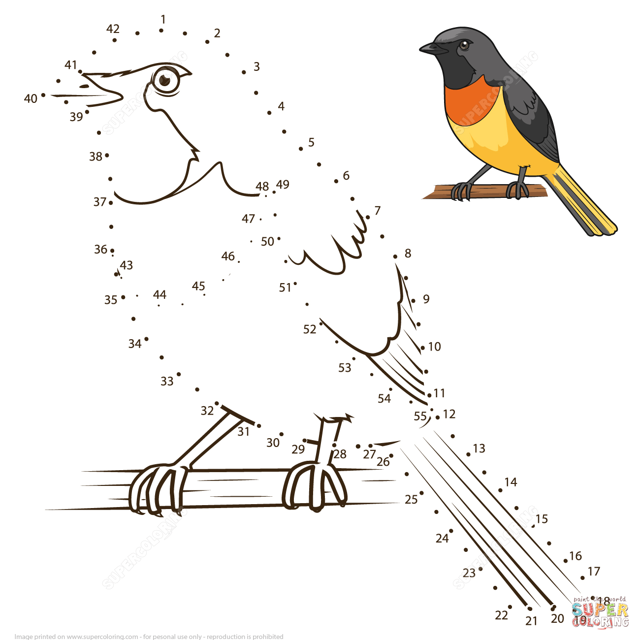 Small Minivet Dot To Dot