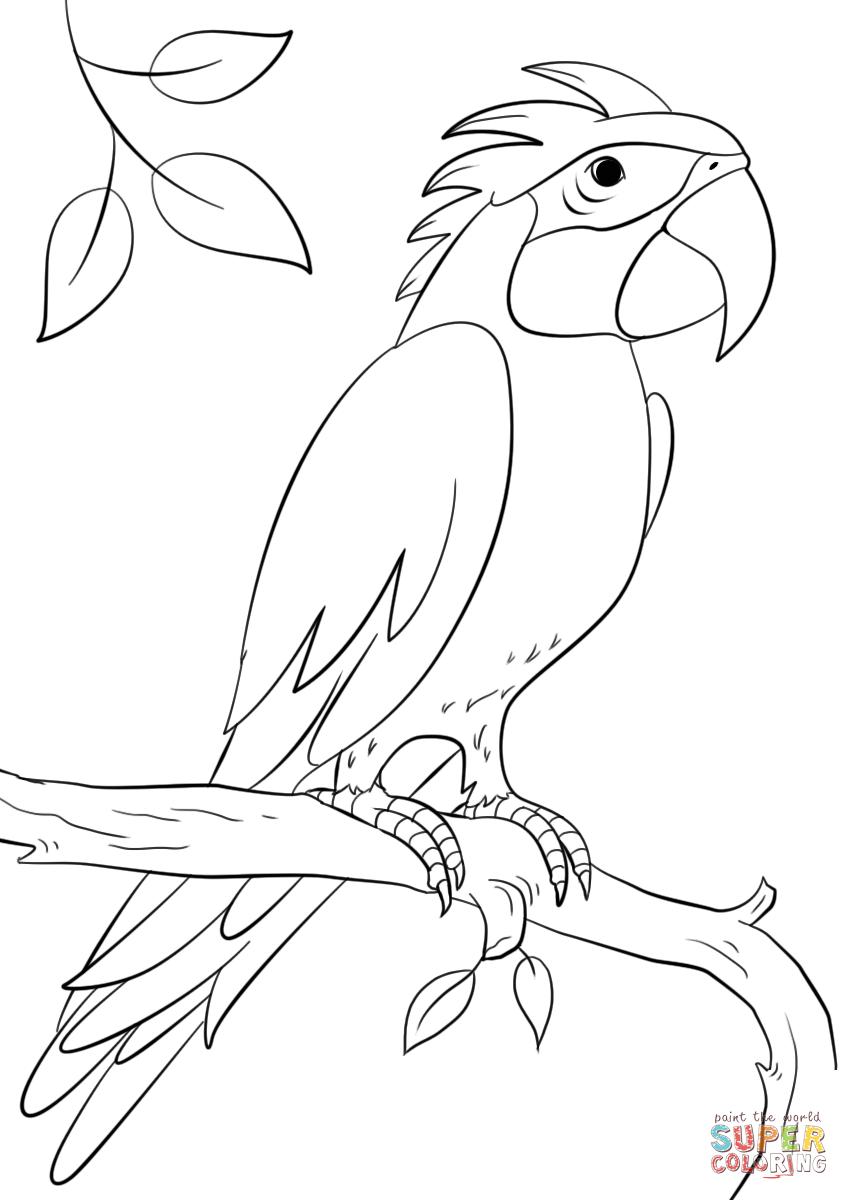 Dibujo de Un loro posado sobre la rama para colorear