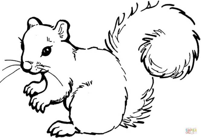 Click The Squirrel Coloring Pages