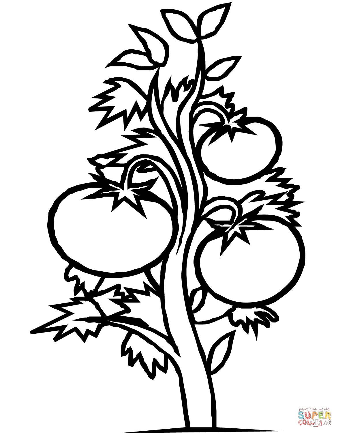 Tomato Plant Coloring Page