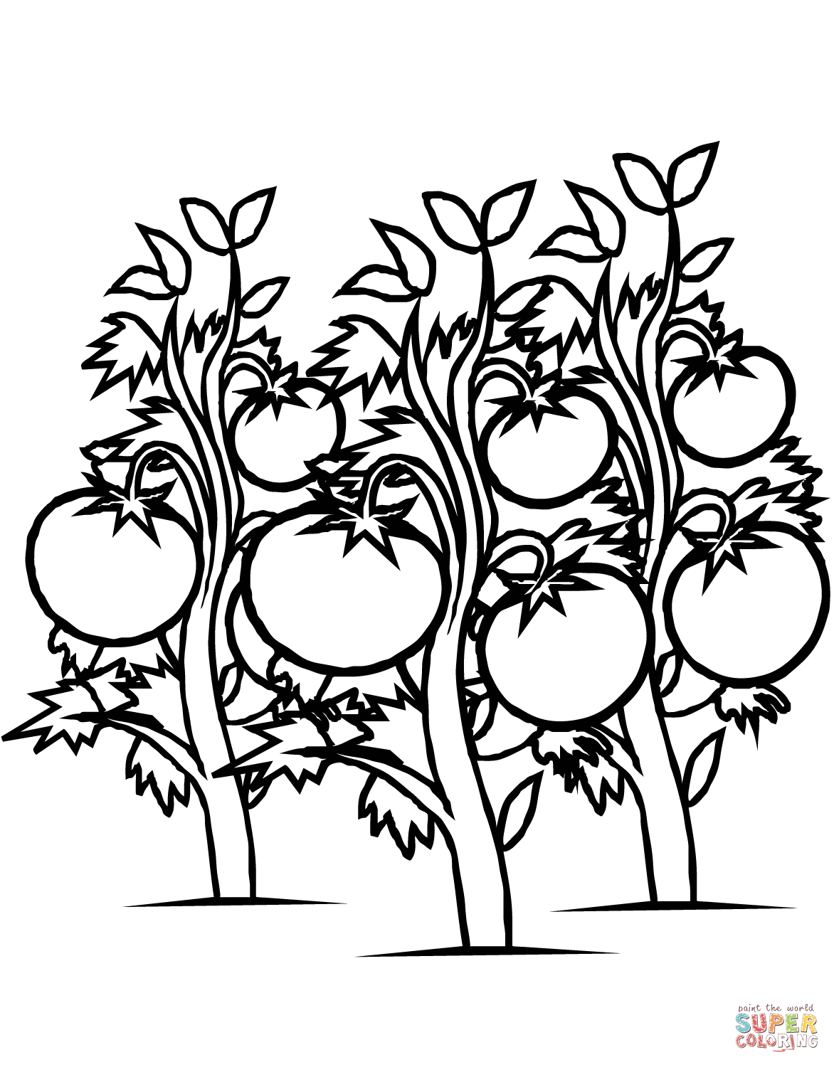 Tomatoes Plants Coloring Page