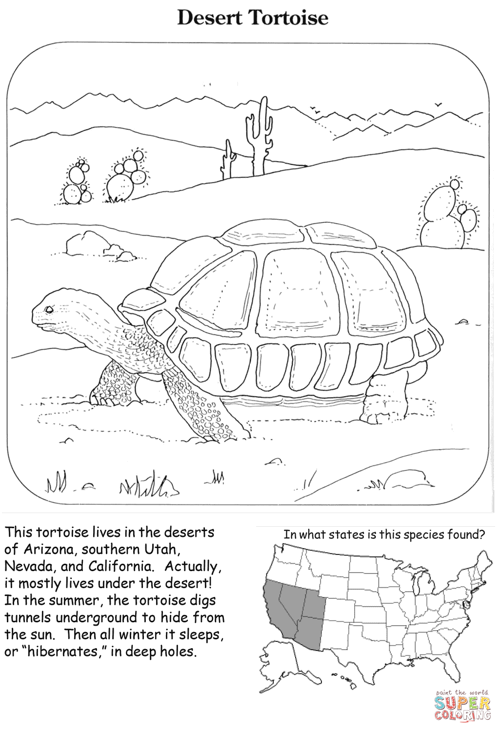 Desert Tortoise Coloring Page