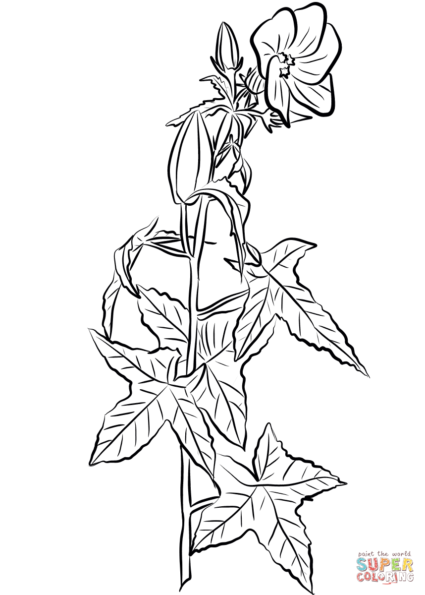 Annual Hibiscus (Abelmoschus Moschatus) coloring page