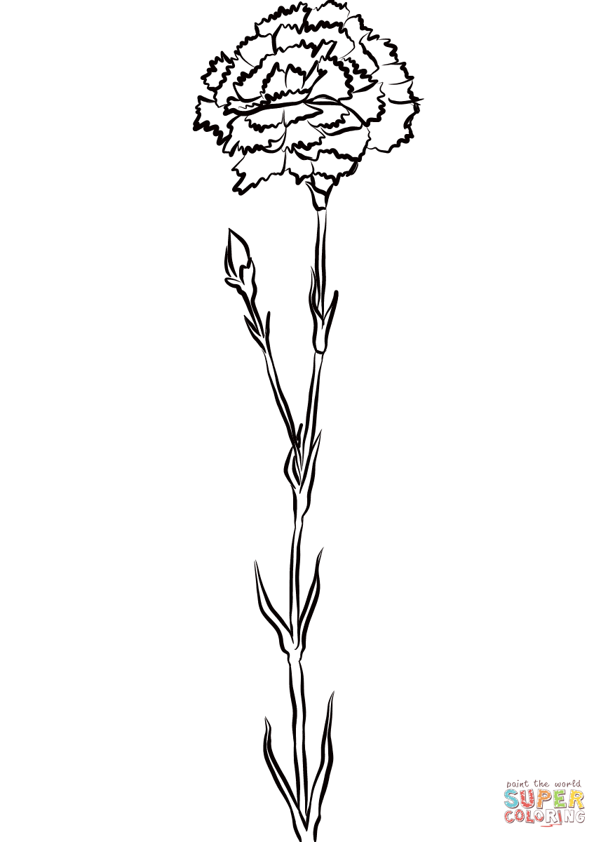 Carnation Coloring Page Free Printable Coloring Pages