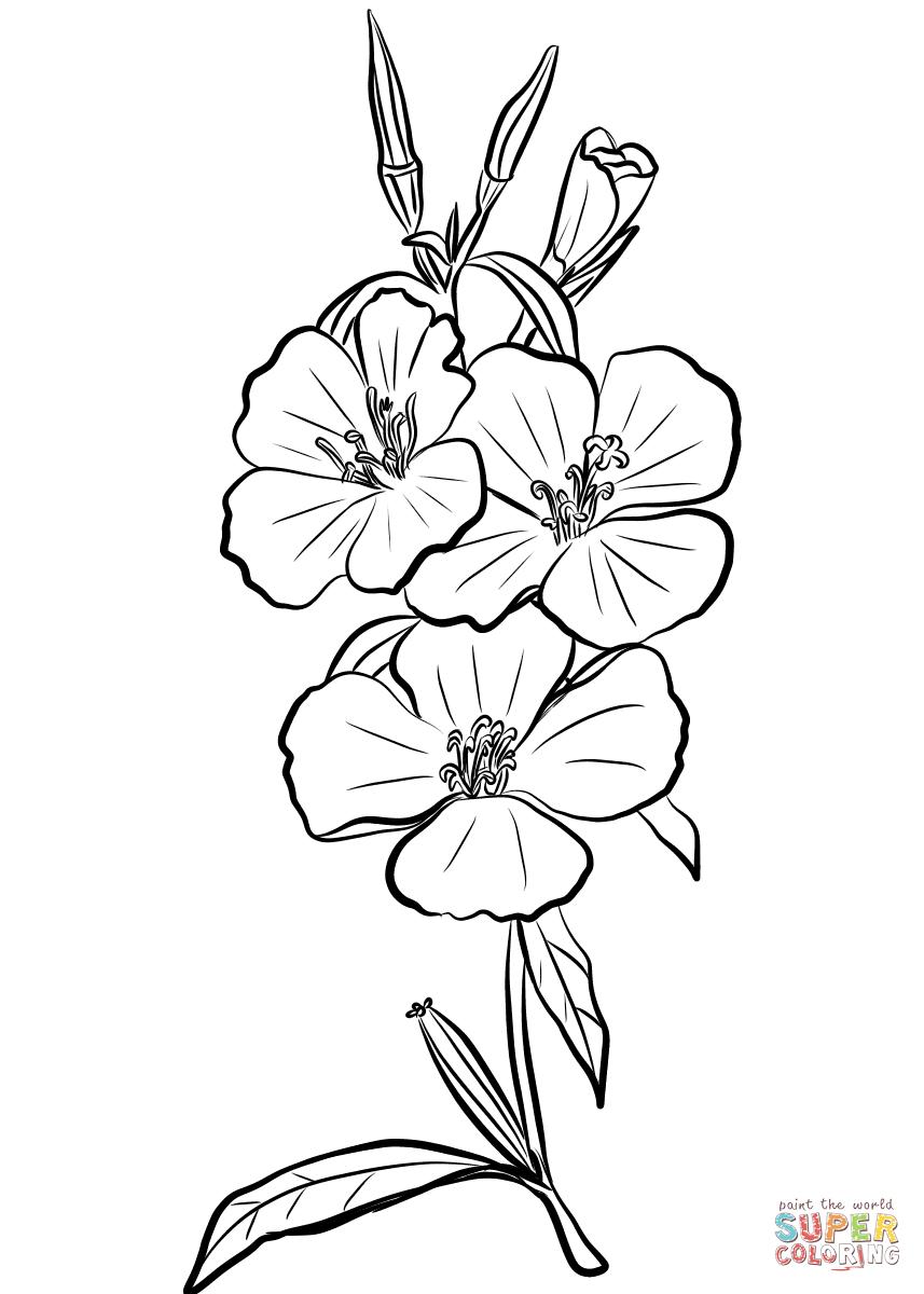 Godetia Rubicunda 'Farewell to Spring' coloring page