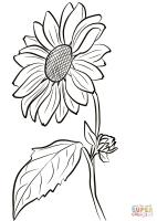 Sonnenblume Bilder Zum Ausmalen