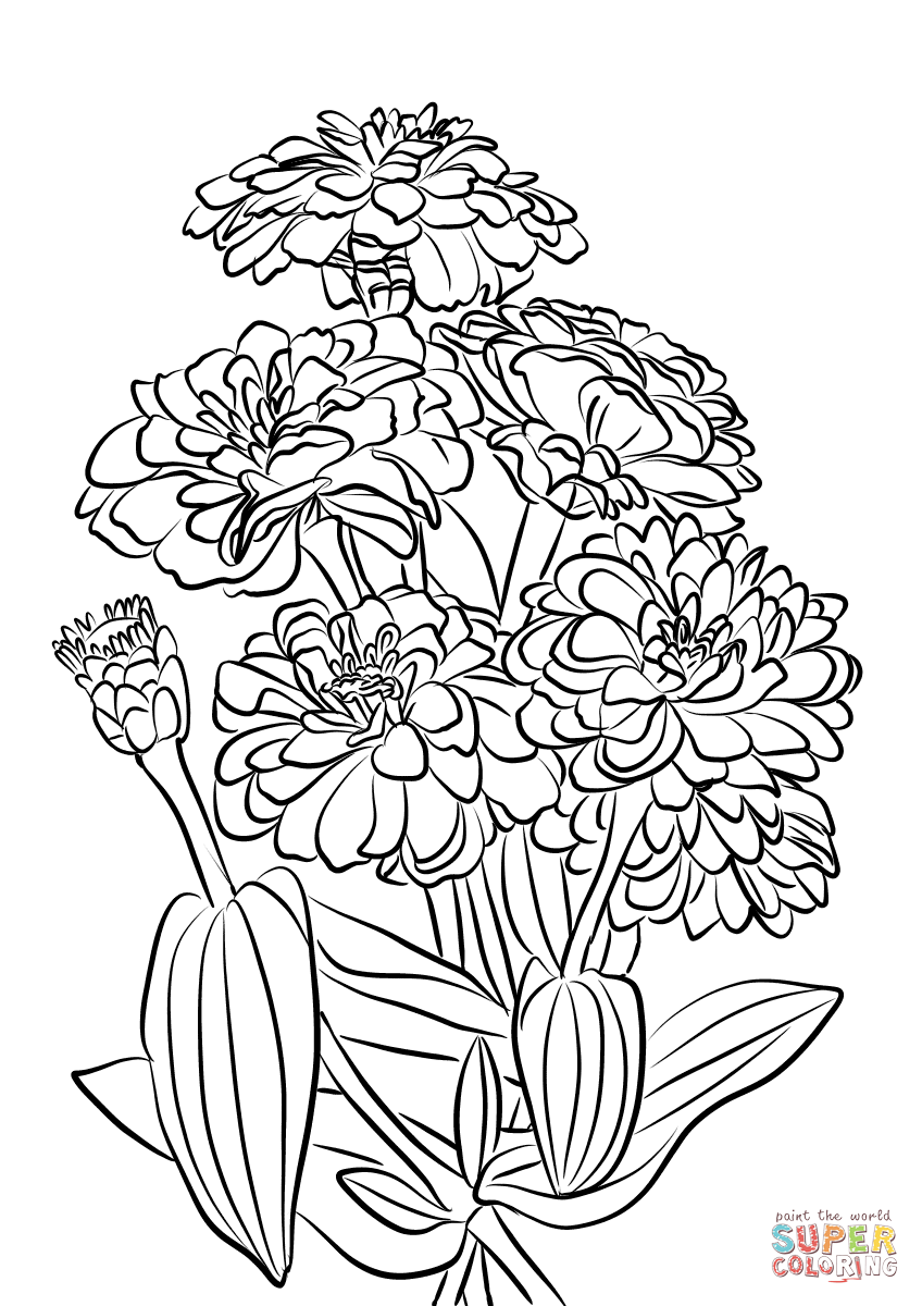 Youth And Age Zinnia Flowers Coloring Page Free