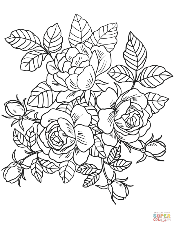 roses flowers coloring page free