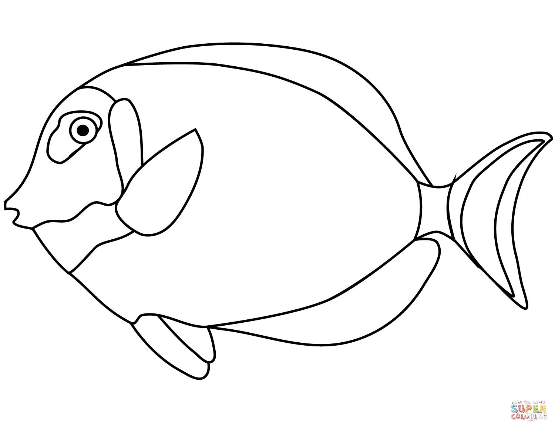 Tang Fish Coloring Page