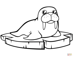 Mammals Walrus Coloring Pages Printable   KINDERPAGES.COM