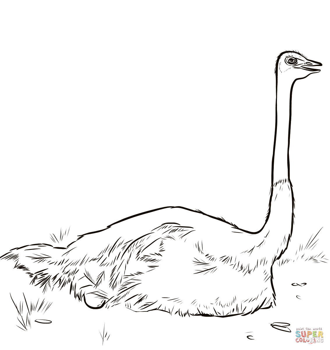 Ostrich Nesting Coloring Page