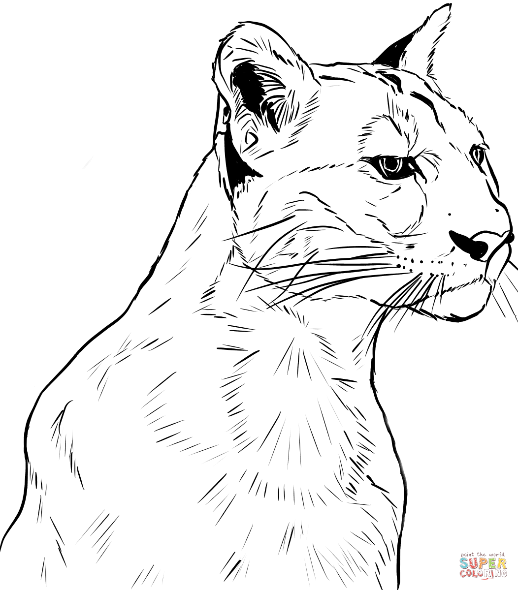 Face of Puma coloring page Free Printable Coloring Pages