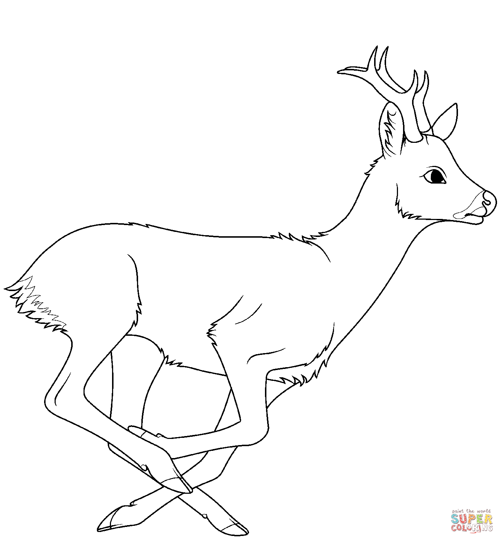 Desene Cu Caprioare