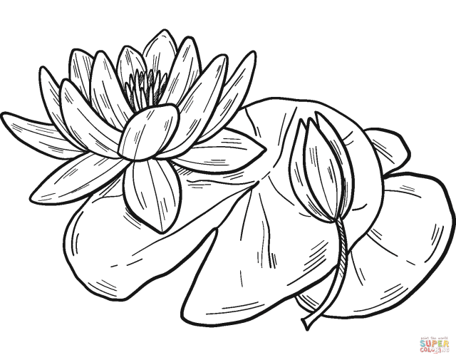 Water Lilies coloring page  Free Printable Coloring Pages