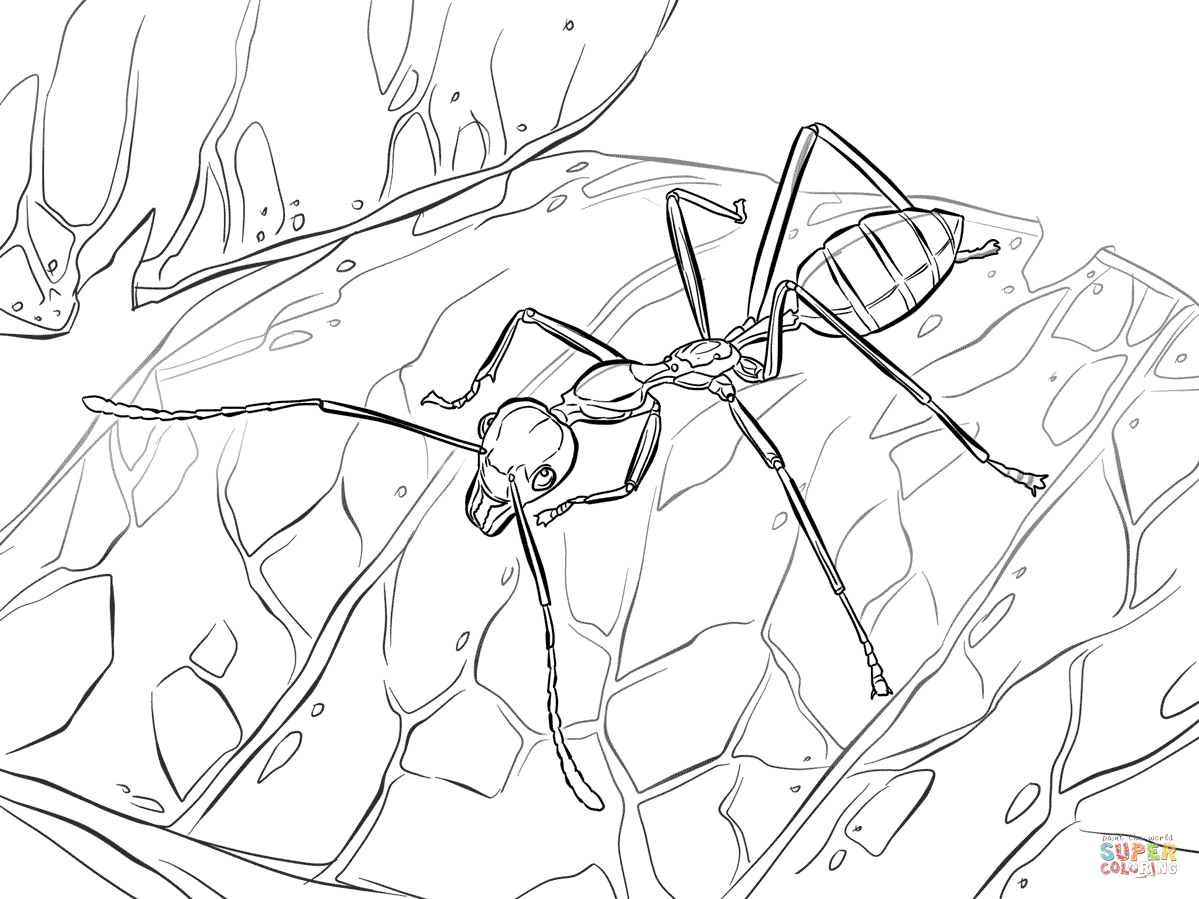 Weaver Ant coloring page  Free Printable Coloring Pages