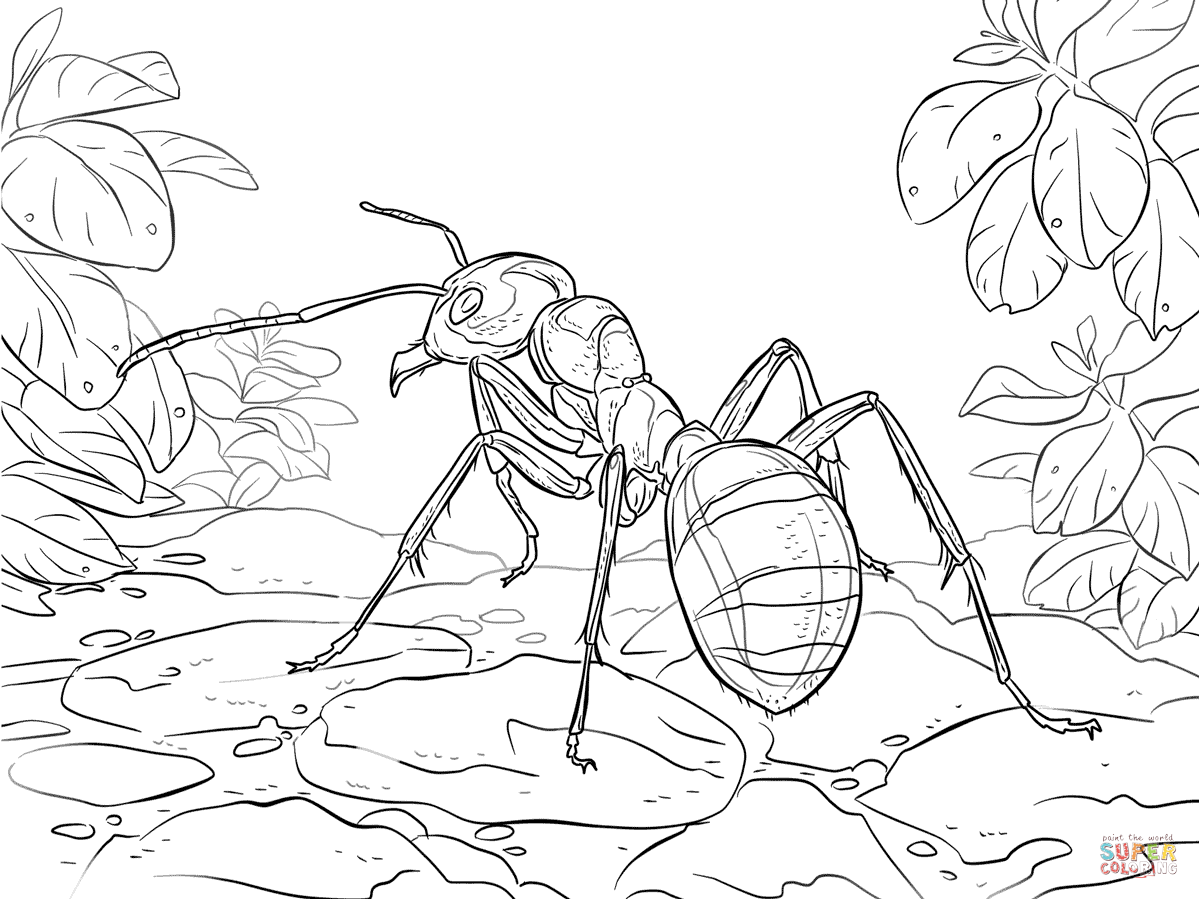 Centipede Clipart