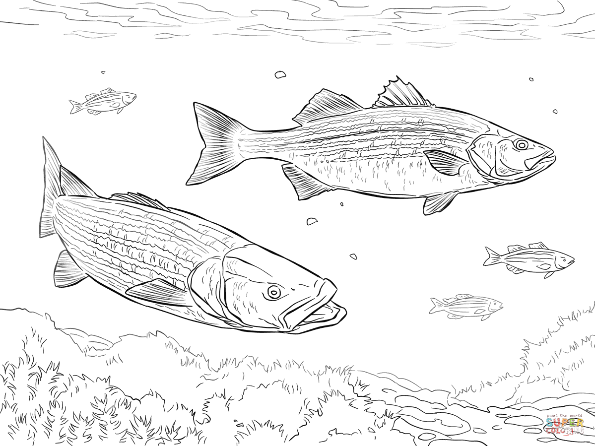 Two Striped Basses Coloring Page