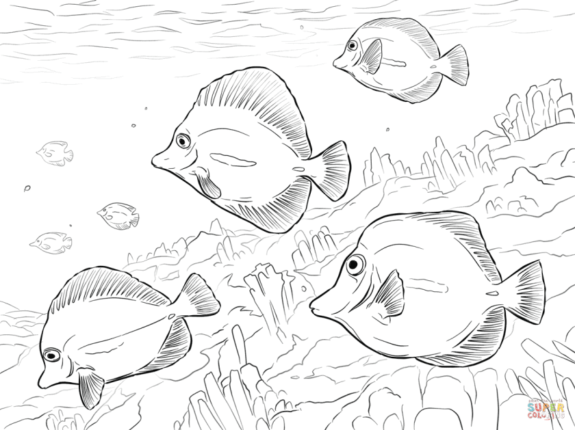 yellow tangs coloring page  free printable coloring pages