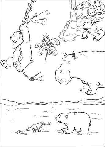 Ausmalbild Der Kleine Eisbr Und Andere Tiere