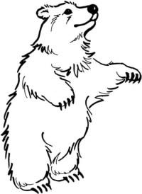 Disegno di Orso in piedi da colorare | Disegni da colorare ...