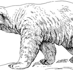Polar Bear Diagram Pid Temperature Controller Kit Wiring Isbjörn Målarbok   Gratis Målarbilder Att Skriva Ut
