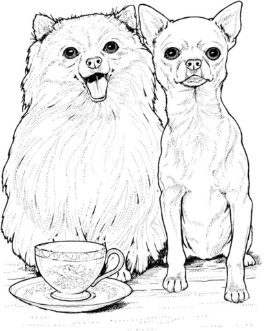 Click To See Printable Version Of Pomeranian Dog And Chihuahua Coloring Page