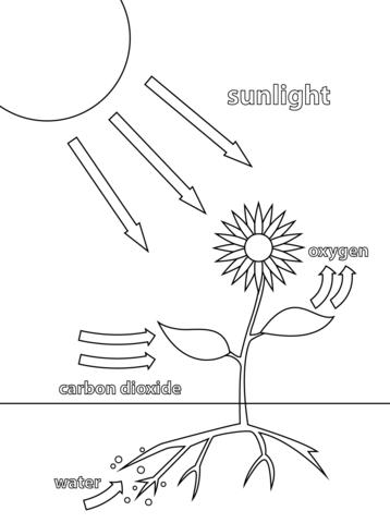 Ipad Air Schematic