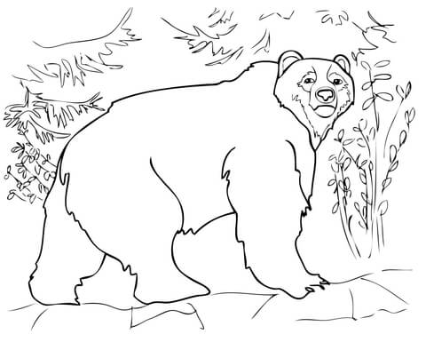 Alaska Black Bear Coloring Pages Coloring Pages