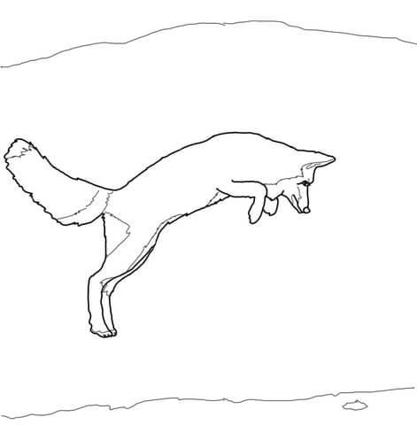 arctic fox coloring page # 9