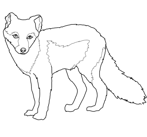 Draw Samples: Arctic Fox Coloring Page