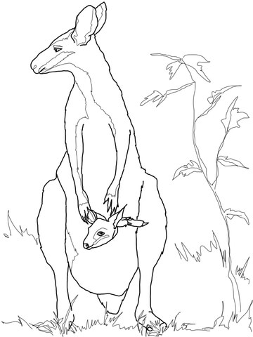 Coloriage Bb Wallaby Avec Sa Mre Coloriages