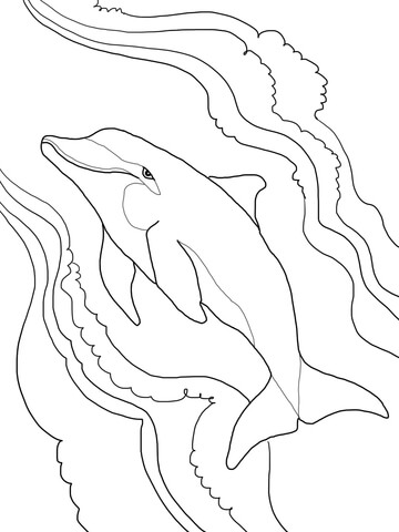 Top 9 Cute Dolphin Colouring Pages for Free Printable