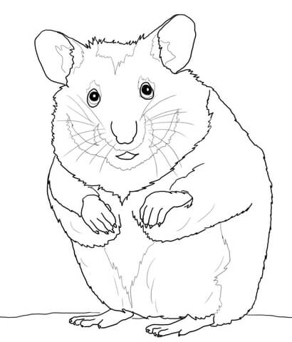 Hamster Coloring Page Free Printable Coloring Pages