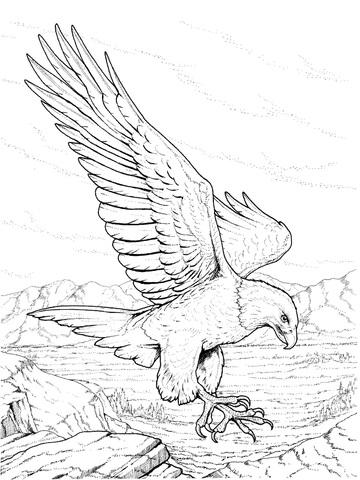 Ausmalbild: Nordamerikanischer Weißkopfseeadlerm landet