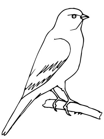 Dibujo de Un canario posado para colorear  Dibujos para