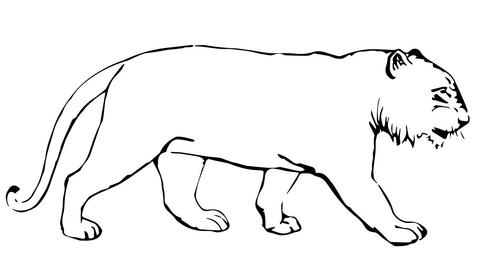 Disegno Di Tigre Senza Strisce Da Colorare